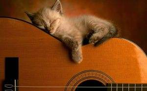 cat sleeping on guitar